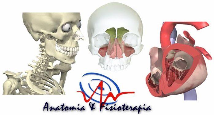 Anatomia e Fisioterapia