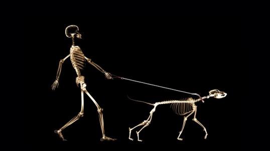 people-skeletons_00427815